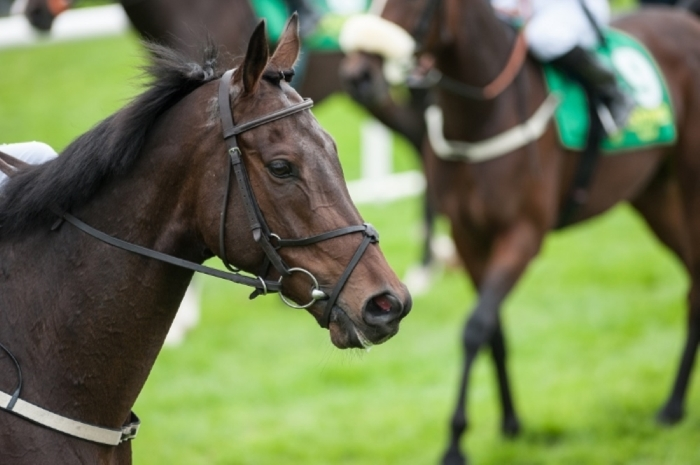 Grand National Who To Bet On